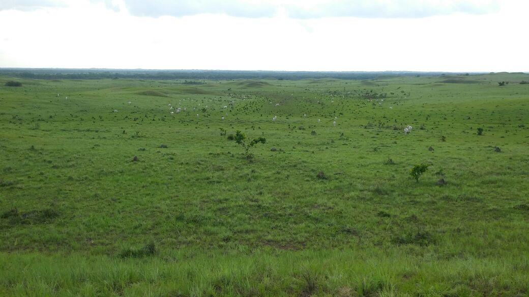 Tutto-Annunci Vendo fattoria 20.000 ettaria in Colombia